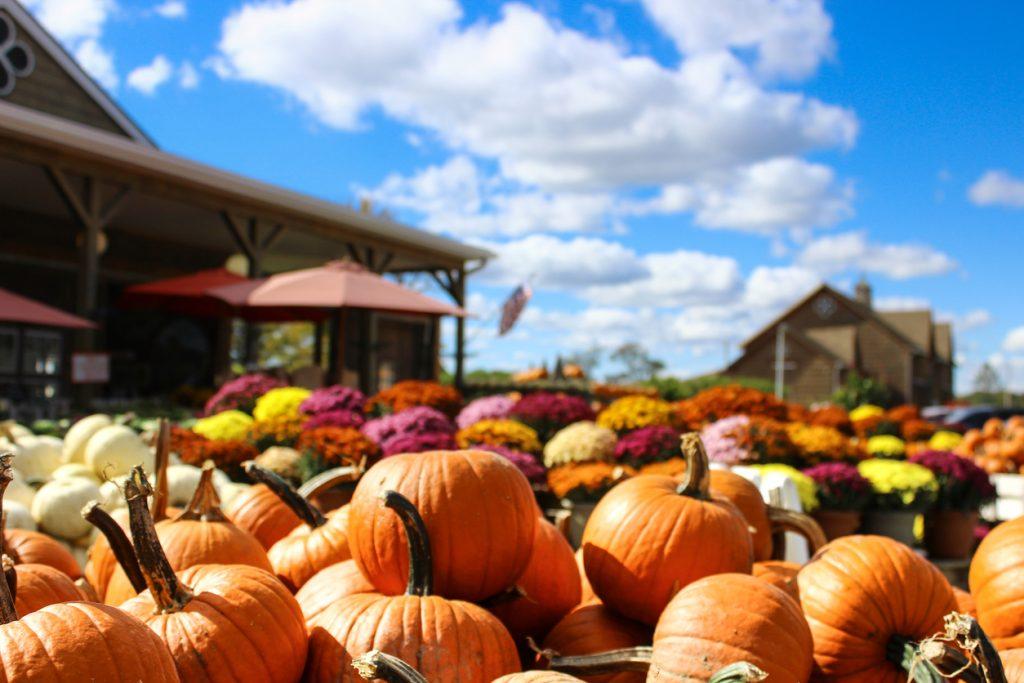 Pumpkin Patch in Tuscaloosa