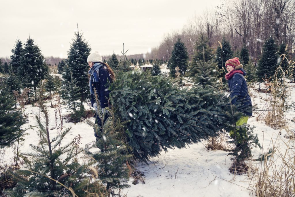 Picking a Christmas tree