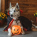 Howl-O-Ween Activities For You And Your Pup