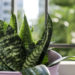 Add Greenery To Your Décor With These Top Indoor Plants